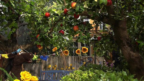 Pferd möchte Äpfel von einem Baum pflücken. | Rechte: NDR/Sesame Workshop