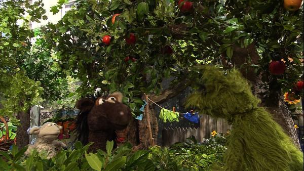 Als Wolle und Pferd Äpfel von einem Baum pflücken wollen, kommt es zum Streit mit dem Wolf. Der behauptet, dass seien seine Äpfel und sein Baum, dabei hängen sie doch in Wolle und Pferds Garten hinein. | Rechte: NDR/Sesame Workshop