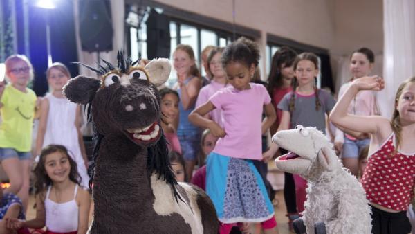"""In der Tanzschule kommt Pferd irgendwie mit den Tänzen nicht so richtig klar: Ständig kommt er mit den Hufen durcheinander, bis schließlich """"Freestyle"""" auf dem Programm steht...   Rechte: NDR/Sesame Workshop/Thorsten Jander"""