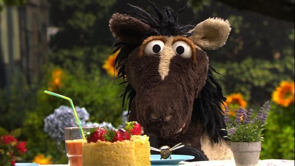 Oh nein! Gerade als Wolle und Pferd im Garten ihren Kuchen essen wollen, taucht eine Biene auf. Pferd gerät in Panik.   Rechte: NDR/Sesame Workshop