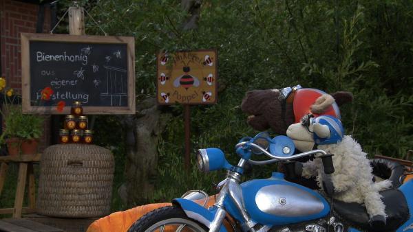 Bienen sind doch total gefährlich, oder nicht? Bei einem Imker wollen Pferd und Wolle das genauer herausfinden. | Rechte: NDR/Sesame Workshop