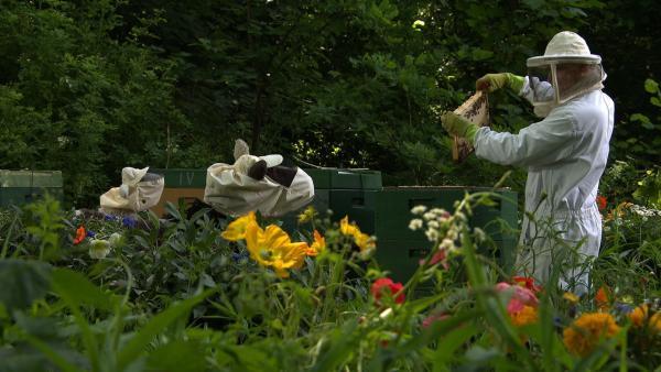 Beim Imker erleben Wolle und Pferd eine echte Überraschung: Bienen sind in Wahrheit ganz tolle und wichtige Tiere und gar nicht zum Fürchten! | Rechte: NDR/Sesame Workshop