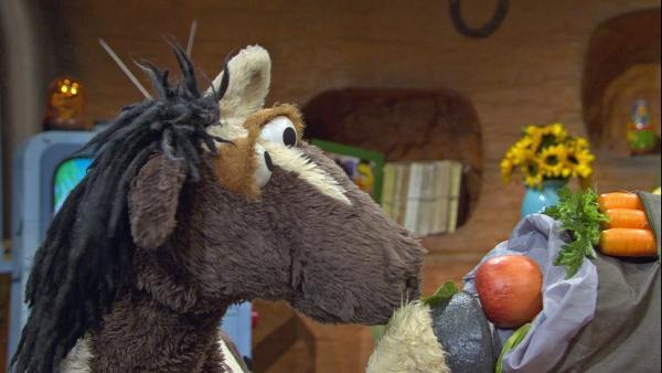 Pferd packt jede Menge Proviant für die Wanderung mit Wolle ein. | Rechte: NDR/Sesame Workshop