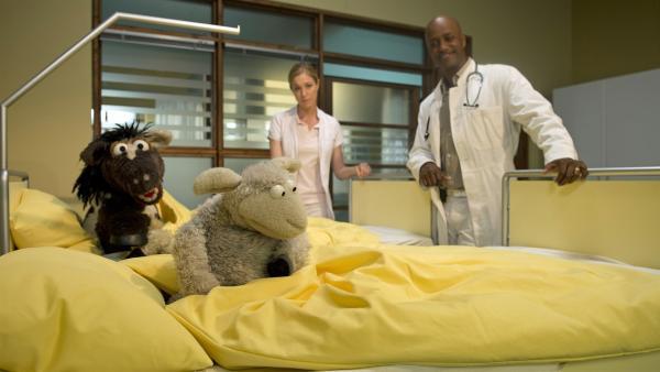 Pferd leistet Wolle im Krankenhaus Gesellschaft. | Rechte: NDR/Sesame Workshop