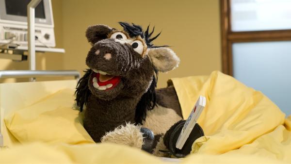 Mit Pferd an seiner Seite ist der Aufenthalt im Krankenhaus für Wolle schon gar nicht mehr so schlimm. | Rechte: NDR/Sesame Workshop
