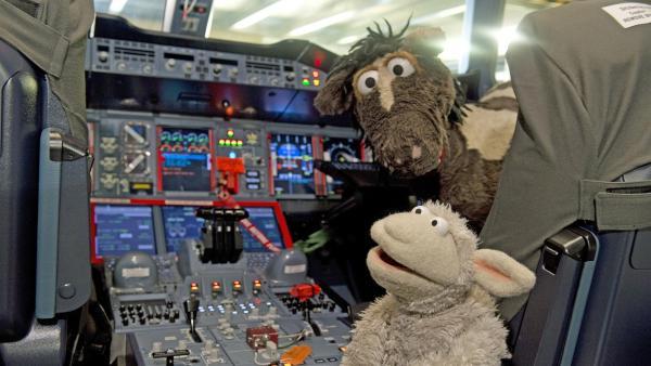 Sogar in das Cockpit eines Flugzeugs dürfen Wolle und Pferd einmal hineinschauen. | Rechte: NDR/Sesame Workshop