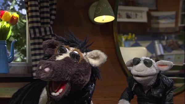 Ob Pferd und Wolle mit Sonnenbrillen cooler sind? | Rechte: NDR/Sesame Workshop