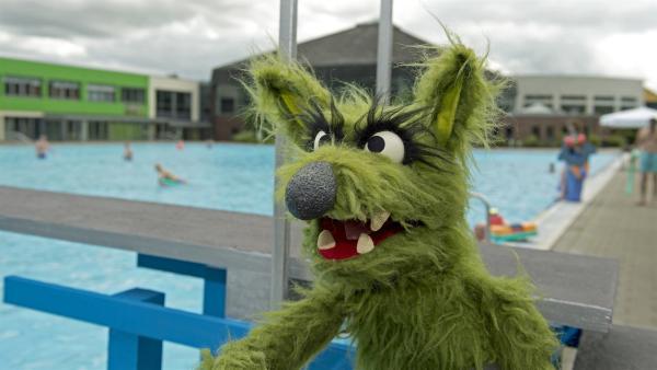 Der Wolf macht sich über Wolle und Pferd lustig. Aber kann er eigentlich selbst schon schwimmen? | Rechte: NDR/Sesame Workshop