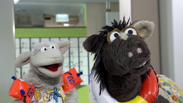Wolle und Pferd haben sich mit Wolf im Schwimmbad verabredet. Dabei können sie gar nicht schwimmen.   Rechte: NDR/Sesame Workshop