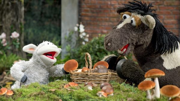 Wolle und Pferd gehen Pilze sammeln.   Rechte: NDR/Sesame Workshop