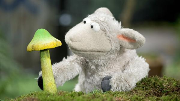 Ob Wolle diesen Pilz mitnehmen soll? | Rechte: NDR/Sesame Workshop