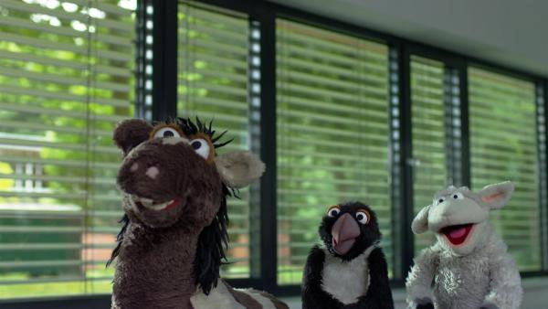 Pferd und Wolle gehen mit dem Pinguin in eine Sprachschule. Vielleicht gibt es ja dort jemanden, der seine Sprache spricht. | Rechte: NDR/Sesame Workshop