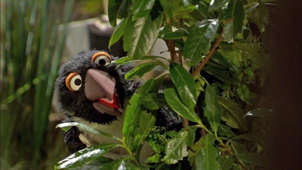 Ein Pinguin taucht bei Wolle und Pferd im Garten auf.  | Rechte: NDR/Sesame Workshop