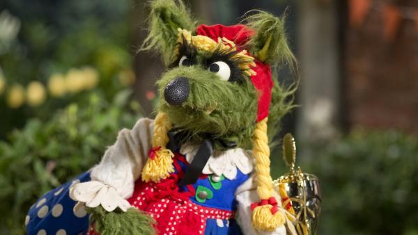 Auch der Wolf kommt verkleidet zum Wettbewerb. | Rechte: NDR/Sesame Workshop