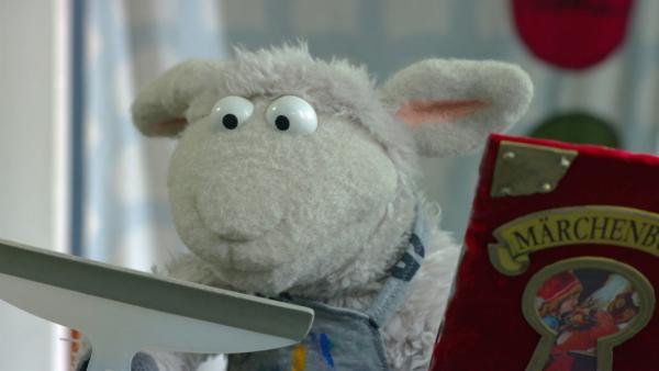 Wolle hat sich das Lieblingsmärchenbuch von dem Wolf ausgeliehen. Leider ist es kaputt gegangen. | Rechte: NDR/Sesame Workshop