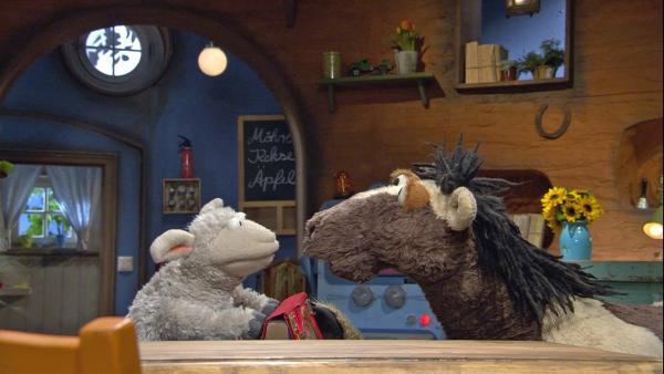 Bei einem Streit machen Wolle und Pferd das Buch kaputt. | Rechte: NDR/Sesame Workshop