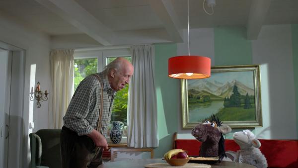 Pferd und Wolle besuchen Herr Wöllke | Rechte: NDR/Sesame Workshop