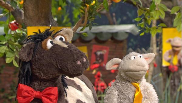 Pferd und Wolle machen Wahlkampf.   Rechte: NDR/Sesame Workshop