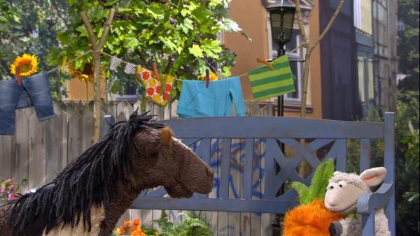 Pferd versucht Wolle aufzuheitern, aber nichts hilft. | Rechte: NDR/Sesame Workshop