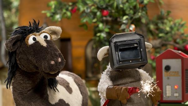 Wolle konstruiert eine Zeitmaschine. | Rechte: NDR/Sesame Workshop