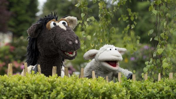 Wolle und Pferd entdecken die Laube. | Rechte: NDR/Sesame Workshop