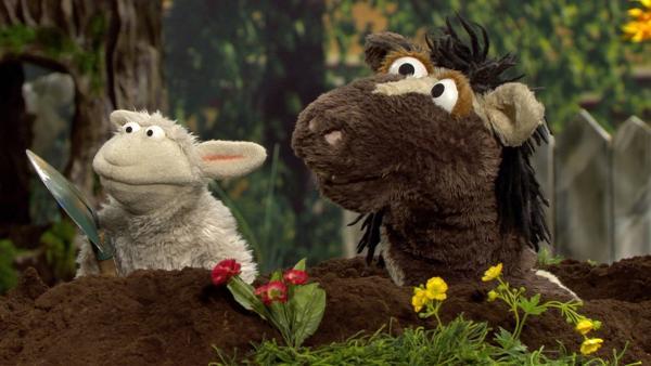Wolle und Pferd versuchen mit Hilfe eines Tunnels in die Möhre zu gelangen. | Rechte: NDR/Sesame Workshop