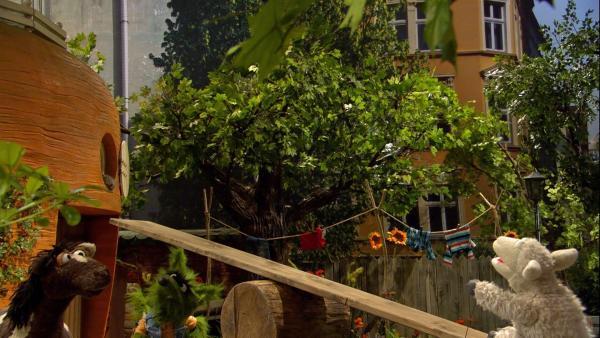 Wolle versucht, sich mit einem Katapult auf die Dachterrasse zu schleudern. | Rechte: NDR/Sesame Workshop
