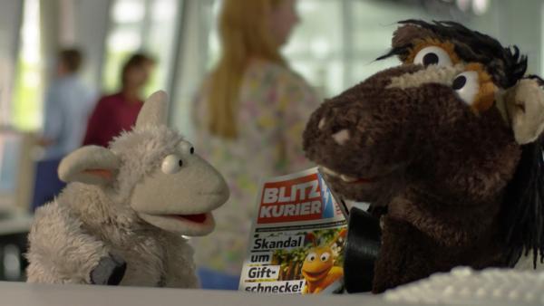 Wolle und Pferd sollen den Artikel über Finchen neu schreiben. | Rechte: NDR/Sesame Workshop