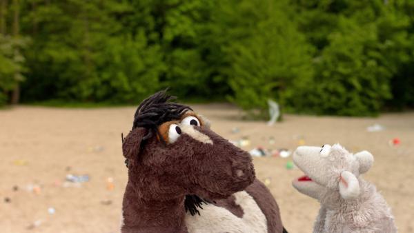 Wolle und Pferd sind erschrocken, weil der Strand voller Müll liegt.   Rechte: NDR/Sesame workshop