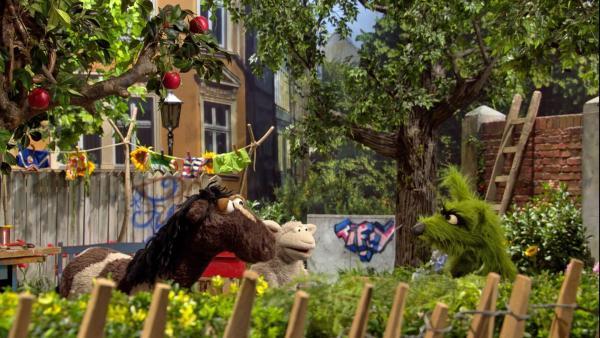 Der Wolf macht sich über Pferd lustig, weil es einen Schluckauf hat. | Rechte: NDR/Sesame workshop