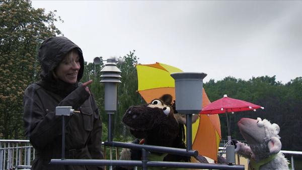 Ob Wetterfee Rike die Sonne wieder herbeizaubern kann? Wolle und Pferd wollen nämlich grillen und dafür können sie Regen gar nicht gebrauchen. | Rechte: NDR/Studio Hamburg