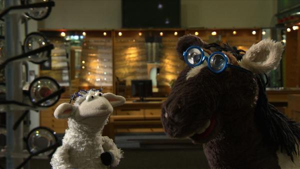 Pferd möchte unbedingt auch eine Brille haben.   Rechte: NDR/Studio Hamburg