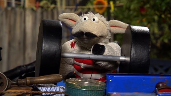 Wolle versucht mit ausgestopften Muskeln und Papphanteln, den Wolf zu beeindrucken. Ob das klappt...? | Rechte: NDR/Studio Hamburg