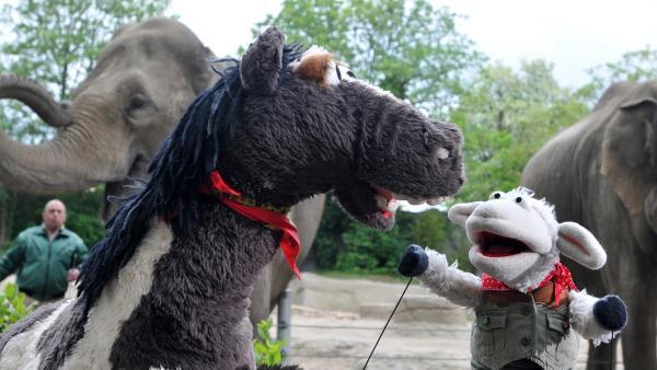 Im Zoo sind Wolle und Pferd auf der Suche nach einem passenden Haustier. | Rechte: NDR/Uwe Ernst