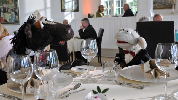 Wolle und Pferd sind eingeladen - in das schickste Restaurant der Stadt! | Rechte: NDR/UWE ERNST
