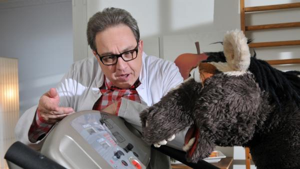 Vielleicht kann der Ernährungsexperte Dr. Schmalhans (Oliver Kalkofe) helfen, dass Pferd wieder dünner wird...   Rechte: NDR/UWE ERNST