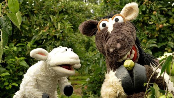 Wolle und Pferd wollen einen Apfelkuchen backen und besuchen einen Obsthof.   Rechte: NDR/Gerd Tratz