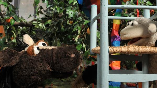 Der Drachen von Wolle und Pferd ist hoch oben im Baum hängengeblieben. Die beiden versuchen sich im Stabhochsprung, doch das geht schief. | Rechte: NDR/Uwe Ernst