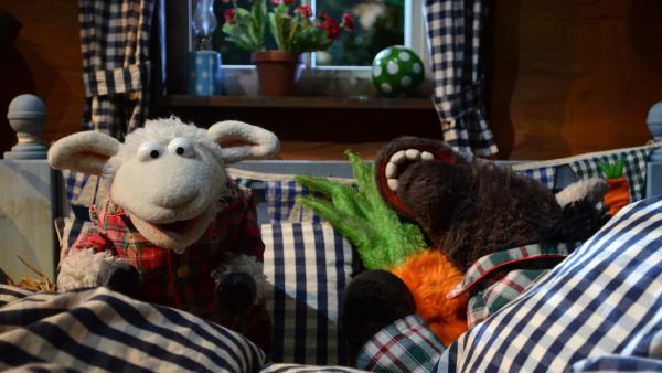 Wolle kann nicht einschlafen | Rechte: NDR Foto: Uwe Ernst