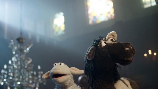 Vorsicht Gespenst: Wolle und Pferd in einem Haus, in dem es spuken soll. | Rechte: NDR Foto: Thorsten Jander