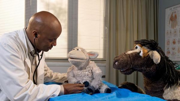 Wolle wird  im Krankenhaus vom Arzt untersucht. | Rechte: NDR/Thorsten Jander Foto: Thorsten Jander