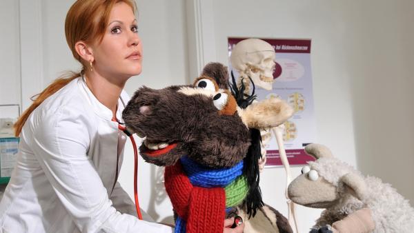 Pferd und Wolle beim Arzt   Rechte: NDR / Uwe Ernst