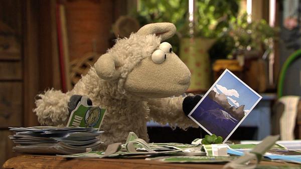 Wolle mit einem Sammelbild | Rechte: NDR Foto: Uwe Ernst