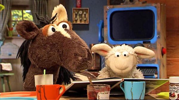 Pferd und Wolle am Küchentisch   Rechte: NDR / Uwe Ernst