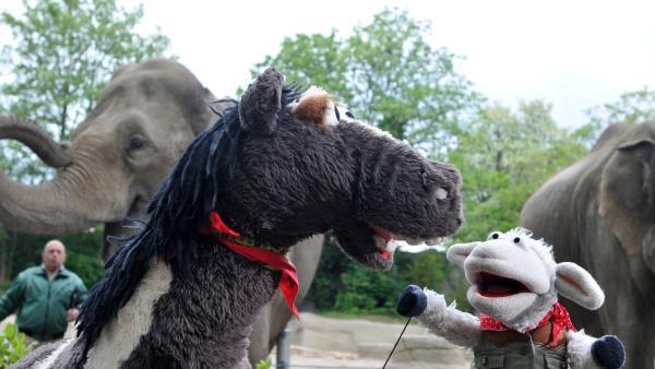 Wolle und Pferd im Tierpark | Rechte: NDR Foto: Uwe Ernst