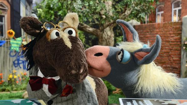 Pferd und die Eselin Marie | Rechte: NDR Foto: Uwe Ernst