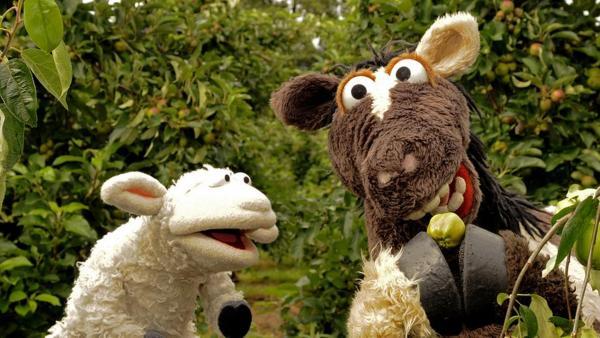 Wolle und Pferd auf einer Apfelplantage | Rechte: NDR / Uwe Ernst