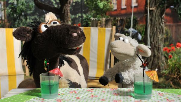 Pferd und Wolle trinken grünen Saft | Rechte: NDR / Uwe Ernst
