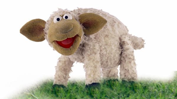 SCHAF - Wolle | Rechte: NDR/Sesame Workshop