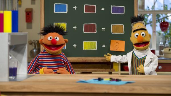 Bert mischt mit einer komplizierten Apparatur aus Glasröhren und -kolben Farben: aus Rot und Blau wird Violett, aus Gelb und Rot wird Orange. Ernie soll herausfinden, was aus Blau und Gelb wird. | Rechte: NDR/SesameWorkshop